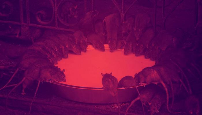 Robert Browning: A hamelni patkányfogó (I.)