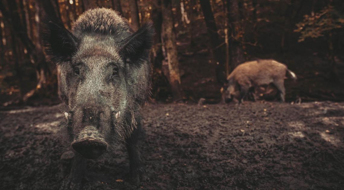 Igor Golubencev: Jó előjelek kakomicli-vadászathoz (részlet)