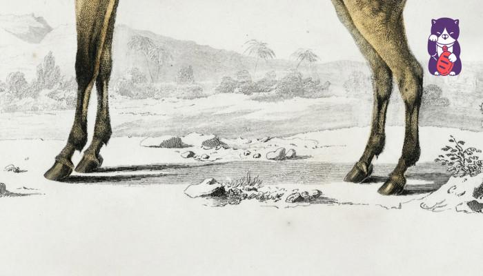 Akutagava Rjúnoszuke: Lóláb (2. rész)
